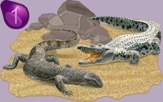 Clasificación de los criadores de reptiles por días de presencia
